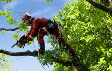 find trusted rated Skegoniel tree surgeons in Belfast