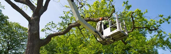 Skegoniel tree surgery services