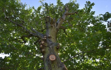 what is Skegoniel tree surgery?